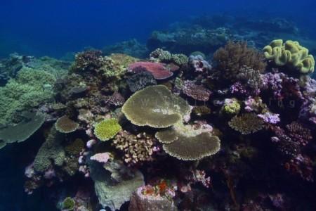 coralli colore