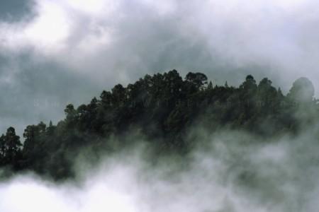 foresta teenerife